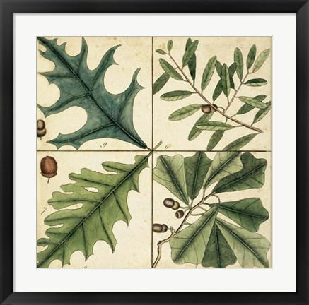 Framed Catesby Leaf Quadrant III Print