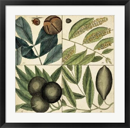 Framed Catesby Leaf Quadrant IV Print