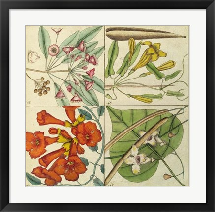 Framed Catesby Botanical Quadrant III Print
