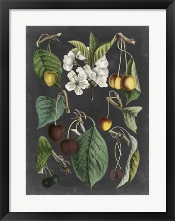 Framed Orchard Varieties II Print
