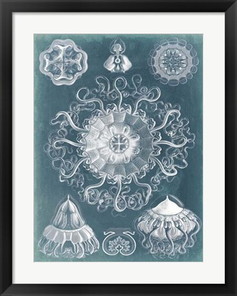 Framed Sealife Blueprint II Print