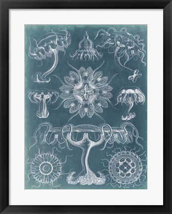 Framed Sealife Blueprint III Print