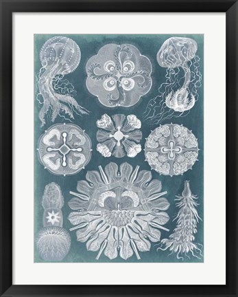 Framed Sealife Blueprint IV Print