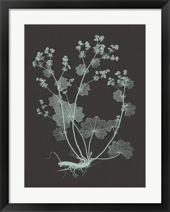Framed Mint & Charcoal Nature Study I Print