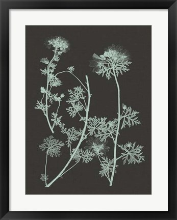 Framed Mint & Charcoal Nature Study IV Print