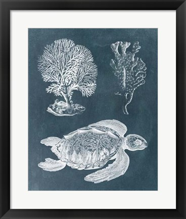 Framed Azure Sea Turtle Study I Print