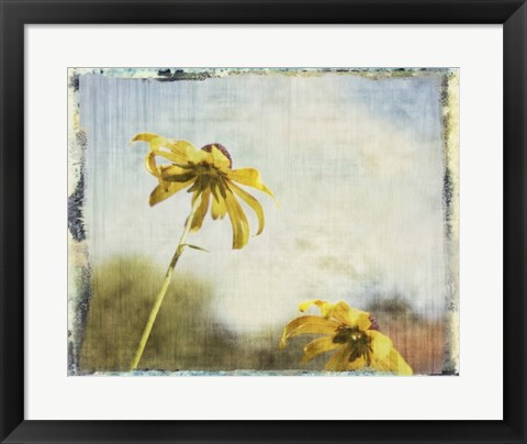 Framed Blackeyed Susans II Print
