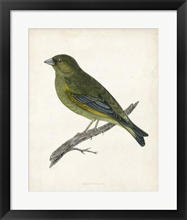Framed Greenfinch Print