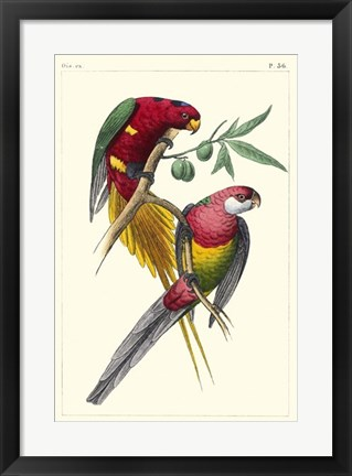 Framed Lemaire Parrots III Print
