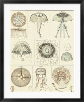 Framed Jellyfish Display Print