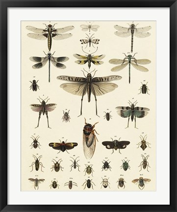Framed Dragonfly Display Print