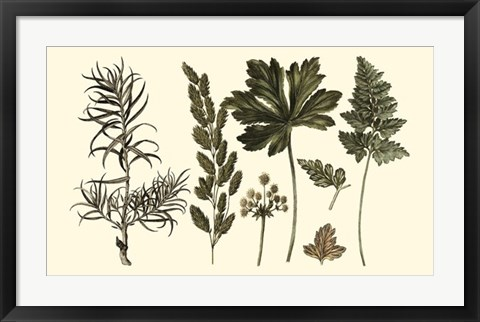 Framed Fern Leaf Folio II Print