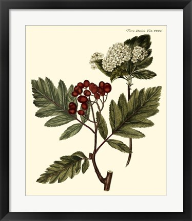 Framed Hawthorne Tree Print