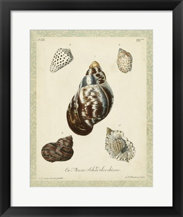 Framed Bookplate Shells VII Print