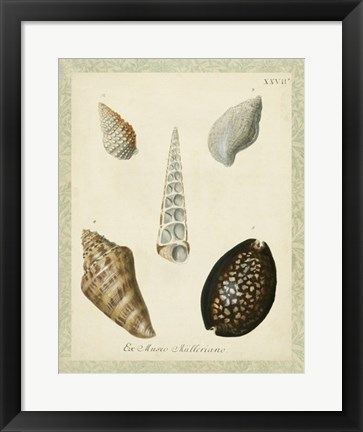Framed Bookplate Shells IX Print