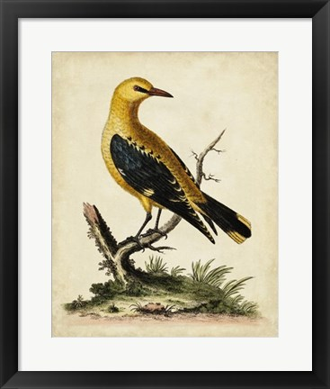 Framed Solitary Perch III Print