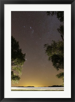Framed Orion constellation between trees, Buenos Aires, Argentina Print