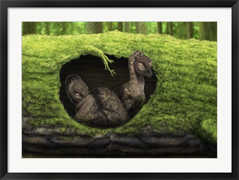 Framed pair of juvenile troodons in the hollow of a tree Print