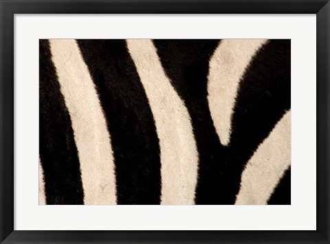 Framed Close-up of Zebra Stripes, Masai Mara, Kenya Print