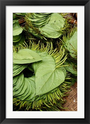 Framed Betel Leaves (Piper Betle) Used to Make Quids For Sale at Market, Myanmar Print