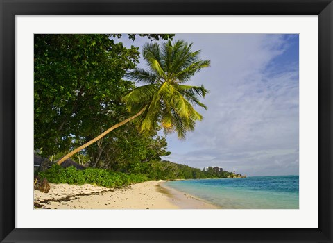 Framed Leaning palm. Anse-Source D'Argent Beach, Seychelles, Africa Print