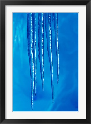 Framed Antarctica, Icicles hanging from the roof of a glacial ice cave. Print