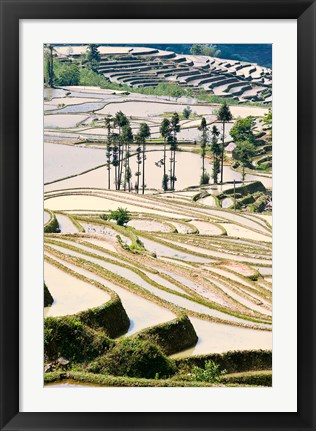 Framed Flooded Ai Cun Rice Terraces, Yuanyang County, Yunnan Province, China Print