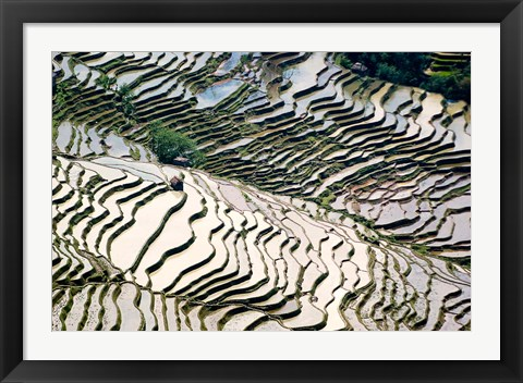 Framed Flooded Bada Rice Terraces, Yuanyang County, Yunnan Province, China Print