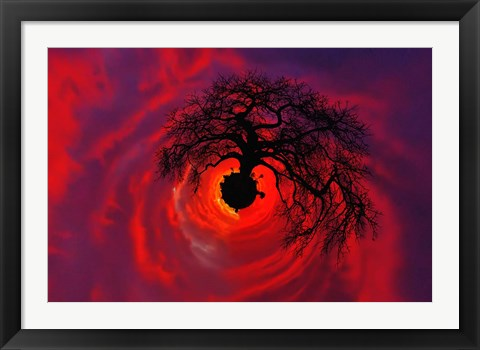 Framed African baobab tree silhouetted at sunset, , Tarangire National Park, Tanzania Print
