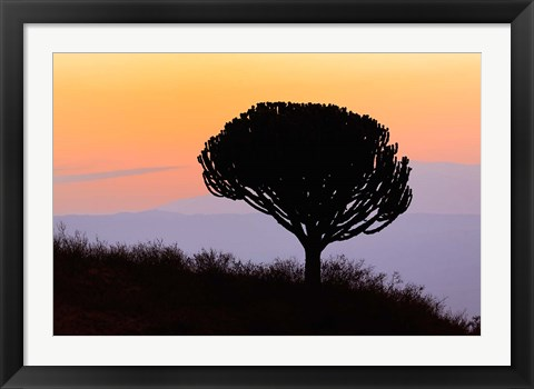 Framed Candelabra Tree, sunrise, Ngorongoro Crater, Tanzania Print