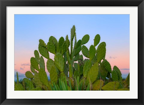 Framed Dry Forest, Berenty National park, Toliara, Madagascar Print