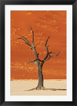 Framed Dead tree, sand dunes, Deadvlei, Namib-Naukluft National Park, Namibia Print
