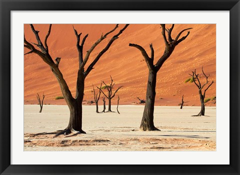 Framed Dead trees with sand dunes, Namibia Print