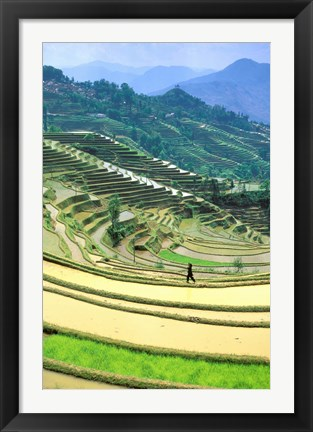 Framed China, Yunnan, Yuanyang Co, Rice Terraces, Mount Ailo Print