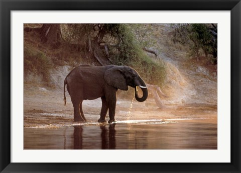 Framed Elephant at Water Hole, South Africa Print