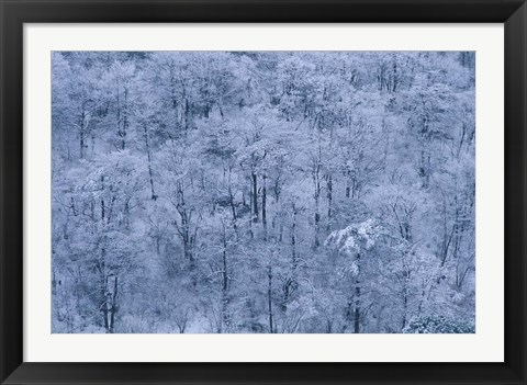Framed Forest Covered with Snow, Mt Huangshan (Yellow Mountain), China Print