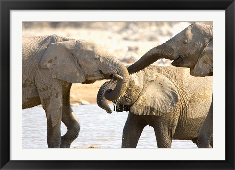 Framed African Elephants at Halali Resort, Namibia Print