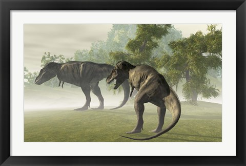 Framed Two Tyrannosaurus Rex rest in the early morning light before the days hunt Print