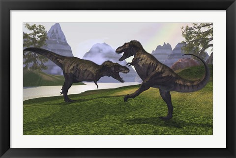 Framed Two Tyrannosaurus Rex dinosaurs fight for the right of a territory Print
