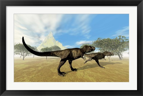 Framed Two Tyrannosaurus Rex dinosaurs are on the hunt for prey Print
