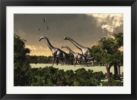 Framed Brachiosaurus dinosaurs walk through a forested area Print
