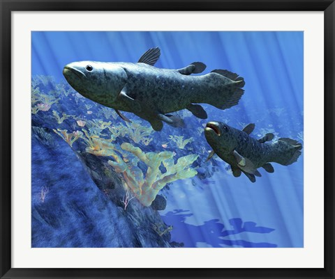 Framed Two Coelacanth fish swimming undersea Print
