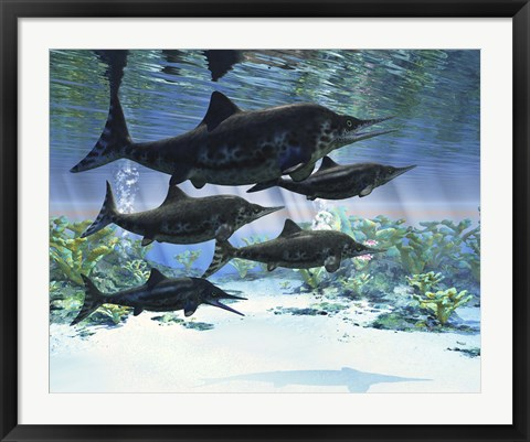 Framed group of Ichthyosaurs swimming in prehistoric waters Print
