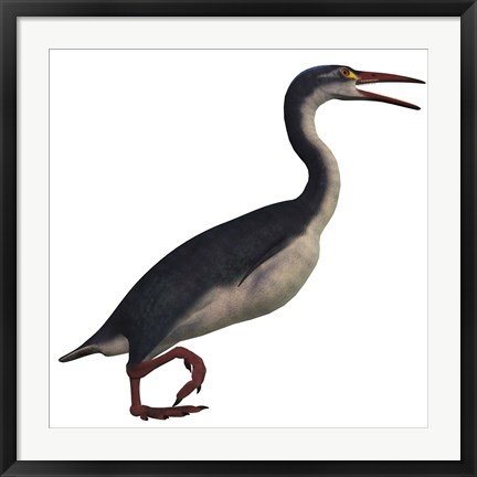 Framed Hesperornis, a genus of flightless birds from the Cretaceous Period Print