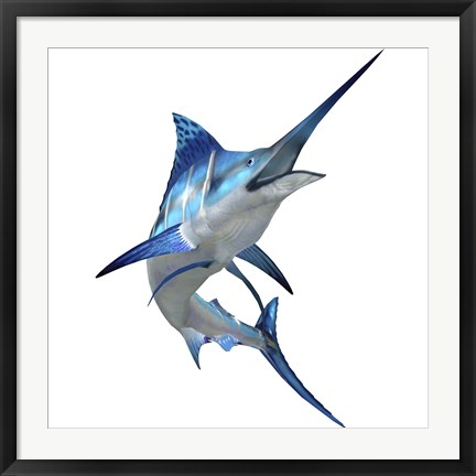Framed Blue Marlin Print