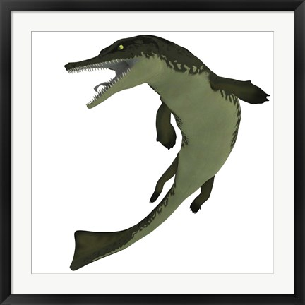 Framed Metriorhynchus, an extinct genus of crocodyliform from the Jurassic Period Print