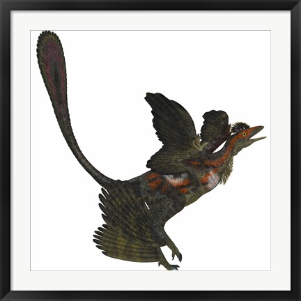 Framed Microraptor, an extinct small flying dinosaur from the Cretaceous Period Print