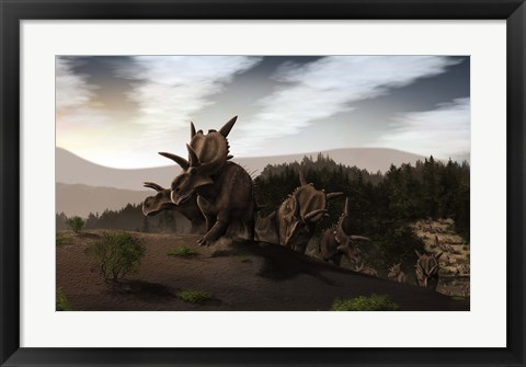 Framed Herd of Xenoceratops foremostensis from the Cretaceous Period Print