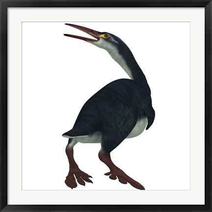 Framed Hesperornis was a a flightless bird that lived during the Cretaceous Period Print