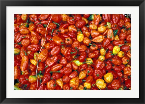 Framed Hot Red Pepper at the Local Market, Madagascar Print